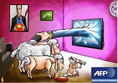 afp-tondeuse-de-moutons.jpg