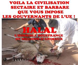 halal-souffrance-animale.png