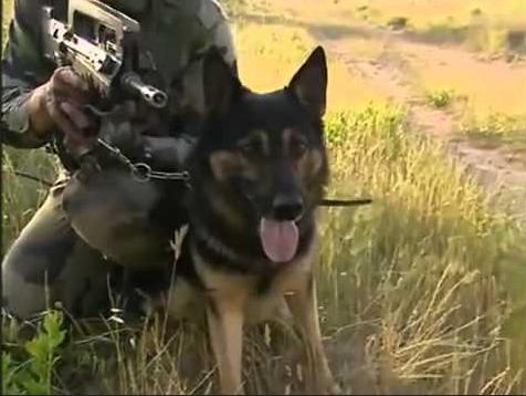 chien-militaire.png